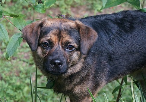 Cute Dog With Wet Face, Dog, Canine, Animal, Black, Tan
