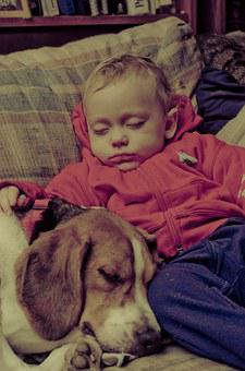 Baby, Dog, Beagle, Sleeping, Couch, Pet, Animal, Cute