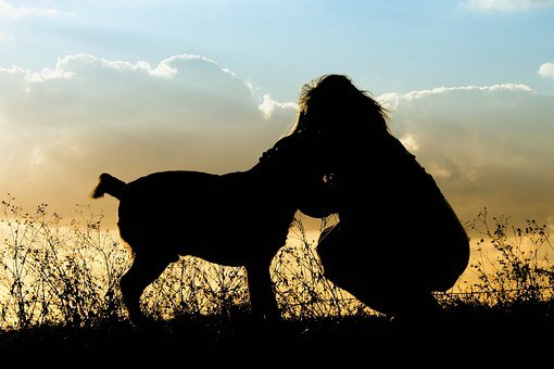 Pets, Dog, Sunset, Girl, Outdoors, Sky, Animal, Canine