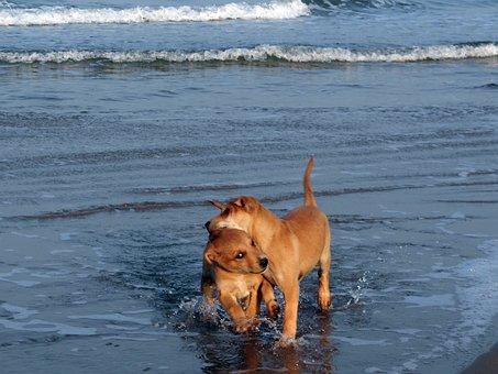 Puppy, Beach, Water, Blue, Playing, Pet, Dog, Animal