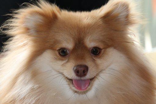 Dog, Animal, Animals, Puppy, Domestic Animals, Smile