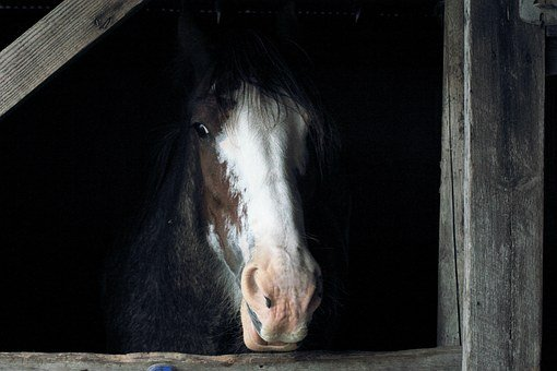 Horse, Stall, Barn, Animal, Farm, Brown, Stable, Equine