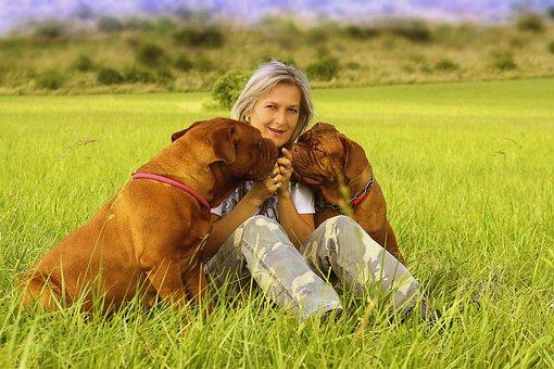 Dog, Girl, De, Dogue, Young, Bordeaux, Mastiffs, French