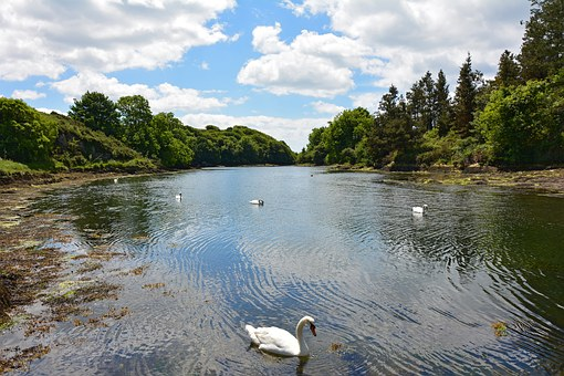 Inlet, Booked, River, Coast, Pier, Swans, Birds