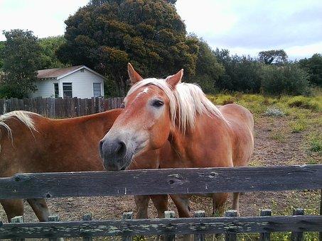 Horse, Stable, Ranch, Animal, Farm, Equine, Mane