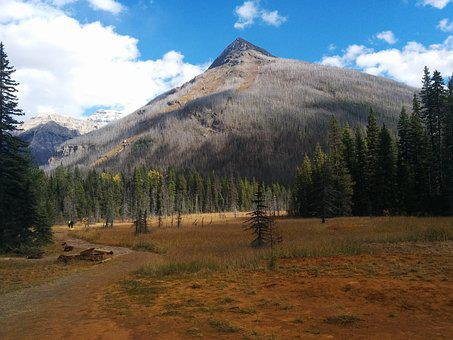 Mountain, Tree, Forest, Rockies, Canada, Paintpots