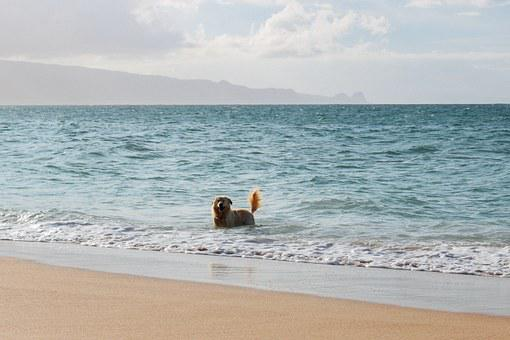 Dog, Beach, Swim, Swimming, Ocean, Pet, Animal, Summer