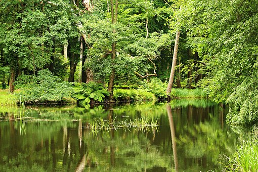 Pond, Forest, Waldsee, Trees, Waters, Water, Bank