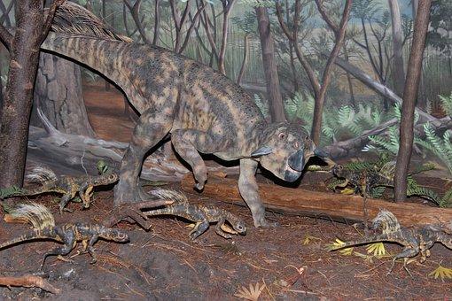 Dinosaur, Psittacosaurus, Psittacosaurus Mongoliensis
