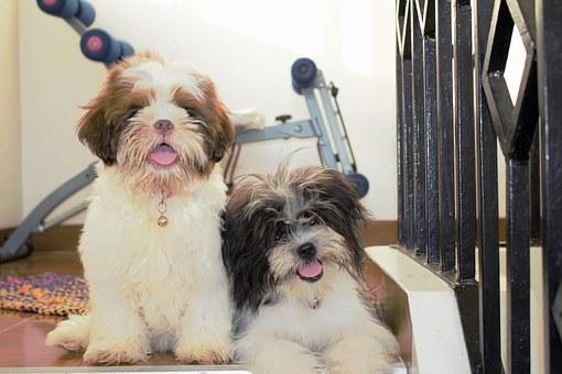 Cute, Dogs, Happy Dog, Smile, Breed, Animal, Puppy