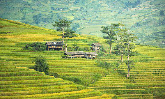 The Village, Agriculture, Canyons, Vietnamese, Thailand