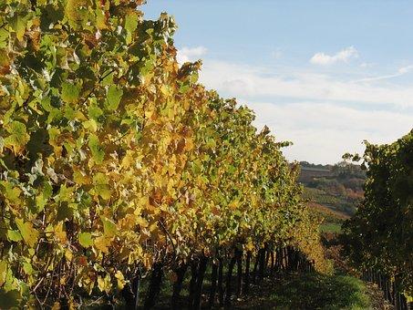 Vines, Winemaker, Vineyard, Winegrowing