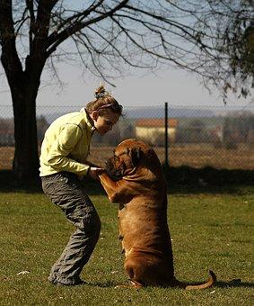 Dog, Girl, Bordeaux, Mastiffs, Mastiff, Woman, French