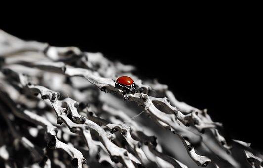 Ladybug, Bug, Ladybird, Animal, Small Bug, Close Up
