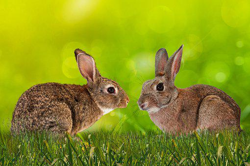 Background, Animals, Rabbit, Meadow, Ears, Whiskers
