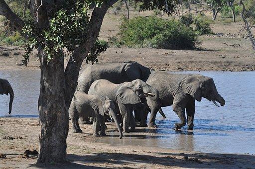 Elephants, Herd, Family, Calf, Pachyderms