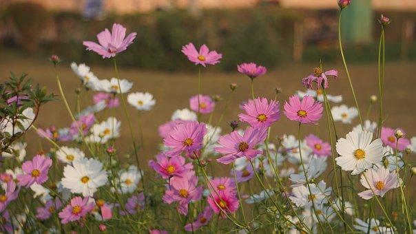 Flower, Nature, Spring, Bloom, Blossom, Flora, Plant