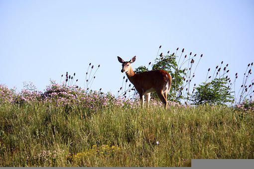 Animal, Wild, Mammal, Nature, Summer, Meadow, Plants