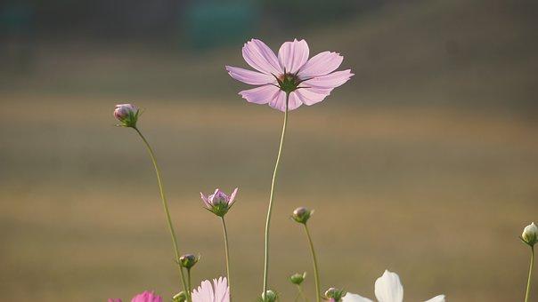 Nature, Flower, Back, Summer, Sunset, Mountains, Sun