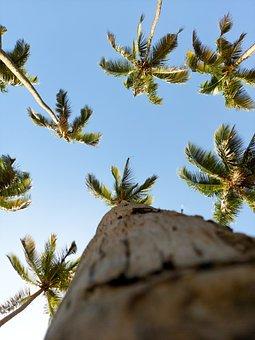 Coconut Trees, Trees, Sky, 4k Wallpaper, Palm Trees