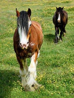 Horses, Animals, Equines, Mammals, Field, Grass