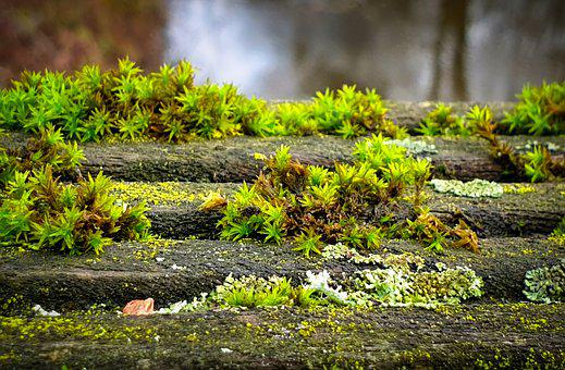 Moss, Wood, Green, Plants, Forest Floor, Nature