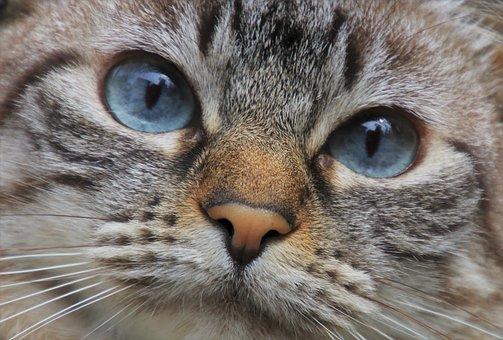 Cat, Pet, Animals, Cat Portrait, Amy Lee, Lonely