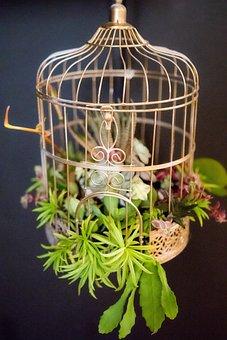 Succulent Cage, Bird Cage, Succulents, Cactus, Nature