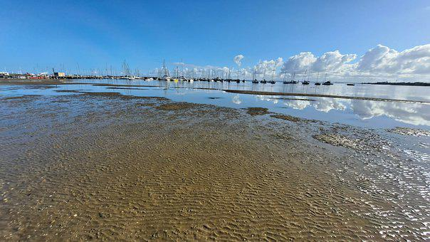 Dog, Beach, Sky, Stones, Stones In Water, Clouds