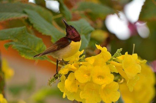 Bird, Hummingbird, Perched, Animal, Plumage, Feathers