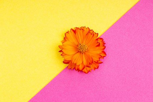 Flower, Petals, Gerbera, Daisy, Freshness, Design