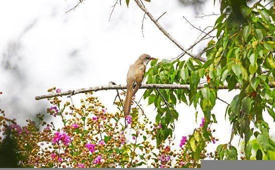 Bird, Perched, Animal, Flowers, Sky, Clouds, Plumage