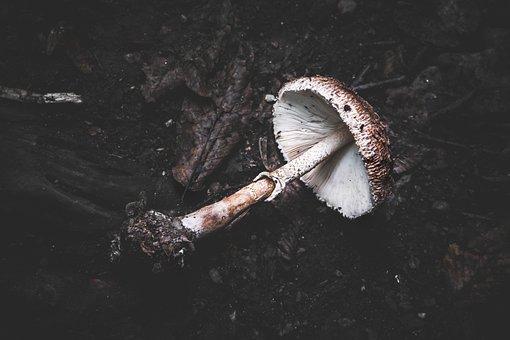 Mushroom, Uprooted, Dark, Root, Fungus, Soil