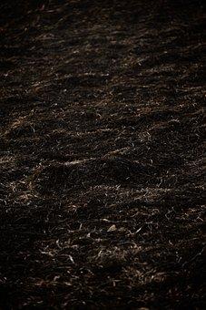 Grass, Soil, Ground, Weeds, Forest Floor, Grasses, Burn
