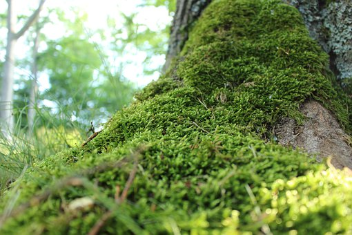 Moss, Tree, Forest, Forest Floor, Wood, Green, Scenic