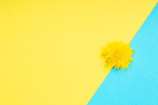 Flower, Minimalist, Background, Dandelion, Bloom