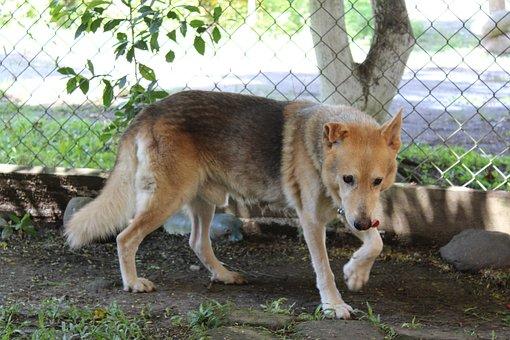 Dog, Pet, Canine, Animal, Fur, Snout, Outdoor, Mammal