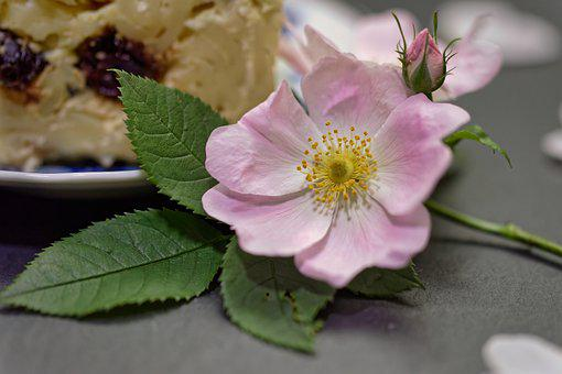 Wild Rose, Flower, Decorative, Pink Flower, Petals, Bud