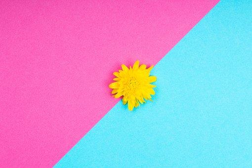 Flower, Minimalist, Background, Dandelion, Bloom, Pink