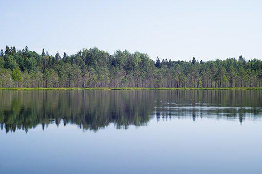 Lake, Forest, Reflection, Trees, Nature, Scenery, Pond