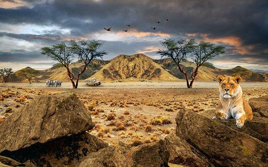 Lioness, Safari, Desert, Elephants, Animals, Bus