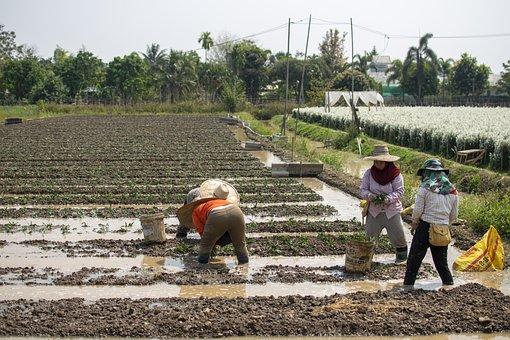 Farmers, Planting, Farm, Field, Farm Workers, Rural