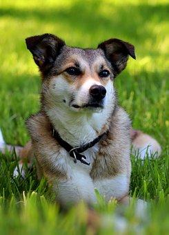 Dog, Pet, Canine, Animal, Lying, Fur, Snout, Mammal