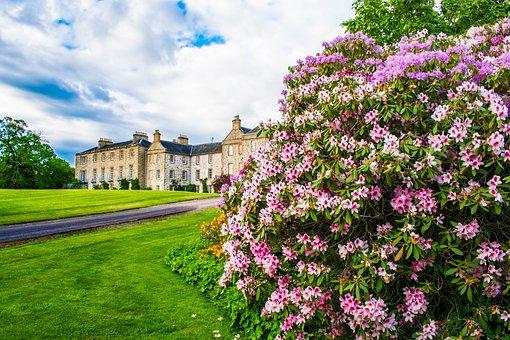 Hirsel House, Park, Coldstream, Garden, Flowers, Plant