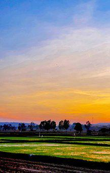 Paddy Field, Farm, Rural, Field, Landscape, Nature