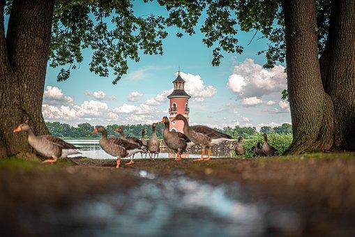 Ducks, Birds, River, Animal, Wild, Park, Outdoors