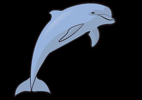 Dolphin, Animal, Marine, Sea, Ocean, Aquatic Animal