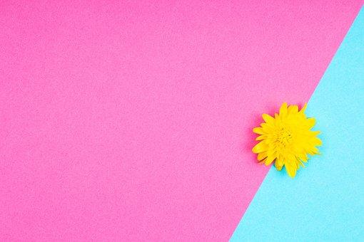 Flower, Petals, Bloom, Colorful, Design, Blooming