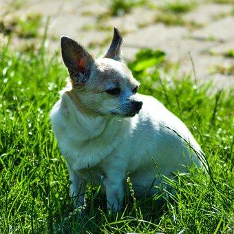 Dog, Pet, Canine, Animal, Fur, Snout, Grass, Meadow