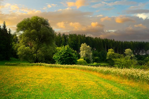 Nature, Meadow, Outdoors, Flower Meadow, Flowers, Bloom